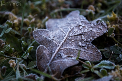 Frozen leave in Bianya