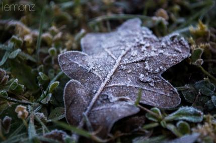 Frozen leave in Bianya